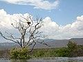 2009-365-137 Bald Eagle Tree (3540918869).jpg