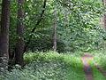 20090613 Drongengoedbos (0001).jpg