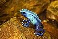 2012-06-09 Oakland Zoo 036 (7439919480).jpg