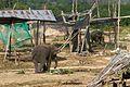2016-04-08 Elephant Safari Krabi 02.jpg