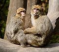 2016-04-21 13-59-10 montagne-des-singes.jpg
