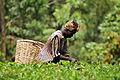 2DU Kenya29 (5366727551).jpg