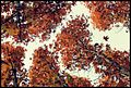 4قلات در پاییز.jpg