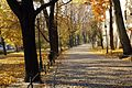 7351vik Planty krakowskie. Foto Barbara Maliszewska.jpg