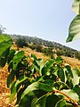 A farm in Ajloun.jpg