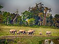 A large family of elephants AJT JohnsinghDSCN5077.jpg
