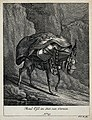 A mule with a heavy load coming down a path in the mountains Wellcome V0021154ER.jpg
