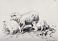 A sheep and two lambs standing on a meadow, with one of the Wellcome V0020825.jpg
