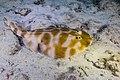 Abrolhos Marine National ParkRobertoCostaPinto17.jpg