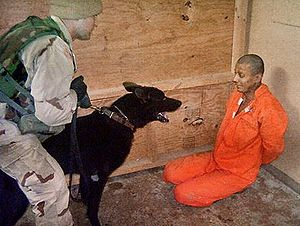 Abu Ghraib torture and prisoner abuse - A bound prisoner is scared using a dog by a US military officer