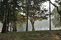 Acharya Jagadish Chandra Bose Indian Botanic Garden - Howrah 2011-01-08 9716.JPG