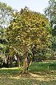 Acharya Jagadish Chandra Bose Indian Botanic Garden - Howrah 2011-01-08 9847.JPG
