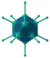 Adenovirus 3D schematic.png