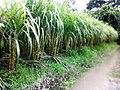 Akher Khet in Karpara Village - panoramio.jpg