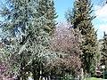 Alberi di Olevano Romano - panoramio.jpg