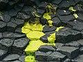 Algae on basalt slabs, Staffa - geograph.org.uk - 907783.jpg