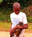 Allen's Swamp Monkey Basankusu by Francis Hannaway.jpg