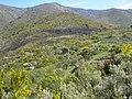 Alvoco da Serra - paisagem da Serra.jpg