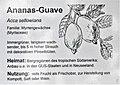 Ananas-Guave.jpg