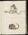 Animal drawings collected by Felix Platter, p1 - (26).jpg