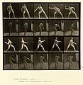 Animal locomotion. Plate 273 (Boston Public Library).jpg