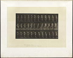 Animal locomotion. Plate 50 (Boston Public Library).jpg