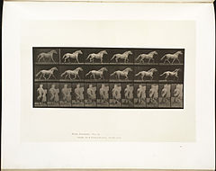 Animal locomotion. Plate 596 (Boston Public Library).jpg
