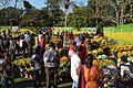 Annual Flower Show - Agri-Horticultural Society of India - Alipore - Kolkata 2013-02-10 4897.JPG