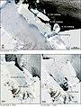 Antarctica antarctique iceberg b15.jpg