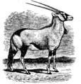 Antelope 3.png