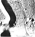 Apollo 15 traverses.jpg