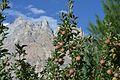 Apples and Passu Cones.jpg