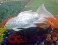 Aquarium fish22.JPG