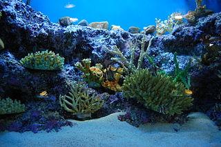 external image 320px-Aquarium_in_Ocean_Park_2.jpg