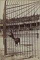 Arènes de Roubaix - Collection Jules Beau - F50 - Année 1899 (droite).jpg
