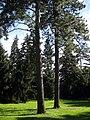 Arboretum, Kórnik 2010 (12).jpg