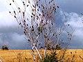 Arbre à oiseaux - panoramio.jpg