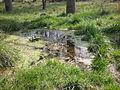 Argine fiume Adige, Boara Polesine, Rovigo 08.jpg