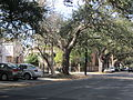 Armstrong-Dana NOLA Jan 2011 Wash Ave Live Oak.JPG