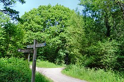Ashtead Common, Thames Downs Link path.jpg