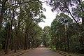 Auburn NSW 2144, Australia - panoramio (68).jpg