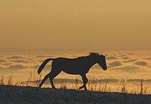 Le cheval et le Diable dans CHEVAL 220px-Auf_dem_Gehrenberg_7