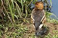 Austin Roberts Bird Sanctuary-046.jpg