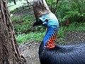 Australia Zoo - panoramio.jpg