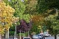 Autumn colours on Sandy Lane.jpg