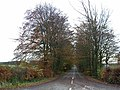 Avenue of trees near Longwitton - geograph.org.uk - 1043361.jpg