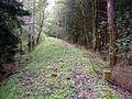 Bahndamm im Waldgebiet zwischen Waldau und Schwarzbach.jpg