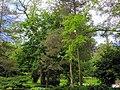 Bailey Arboretum.jpg