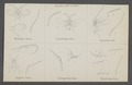 Basalys - Print - Iconographia Zoologica - Special Collections University of Amsterdam - UBAINV0274 046 16 0012.tif