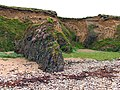 Beach and Cliffs near Bannow Bay - geograph.org.uk - 14557.jpg
